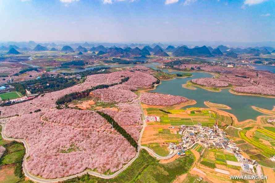 อุทยานซากุระกุ้ยโจว Pingba Farm