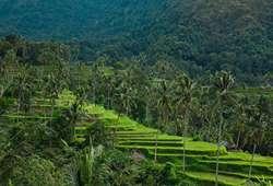 ทัวร์เอเชีย นาข้าวขั้นบันไดเตกัลลาลัง ที่มีชื่อเสียงของอินโดนีเซีย