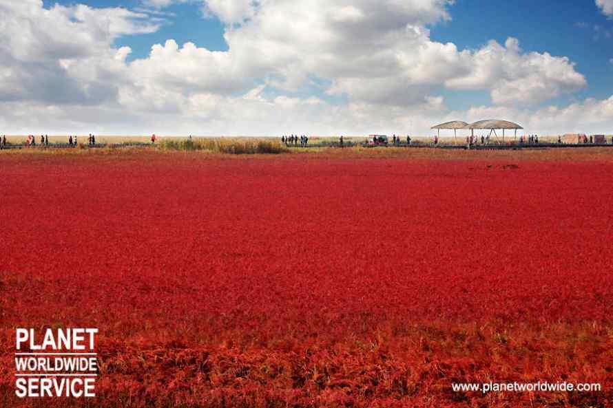ทัวร์หญ้าแดง