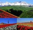 ทัวร์ซินเจียง โรแมนติก..ซินเจียง ดอกทิวลิป ทะเลสาบไซหลี่มู่ (ทะเลสาบประทานพร) :ทัวร์จีน