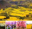 Blossom season @Yunnan ทัวร์จีน แกรนด์ทัวร์หยวนหยาง โหลผิง เจี้ยนสุ่ย ช่วงสวยสุดๆ